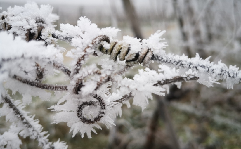 Nebel und Frost….